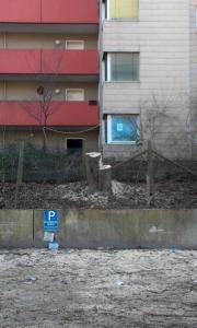 Wennfeld_Baumstumpf